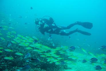 Similan Islands Live Aboard Diving Tour